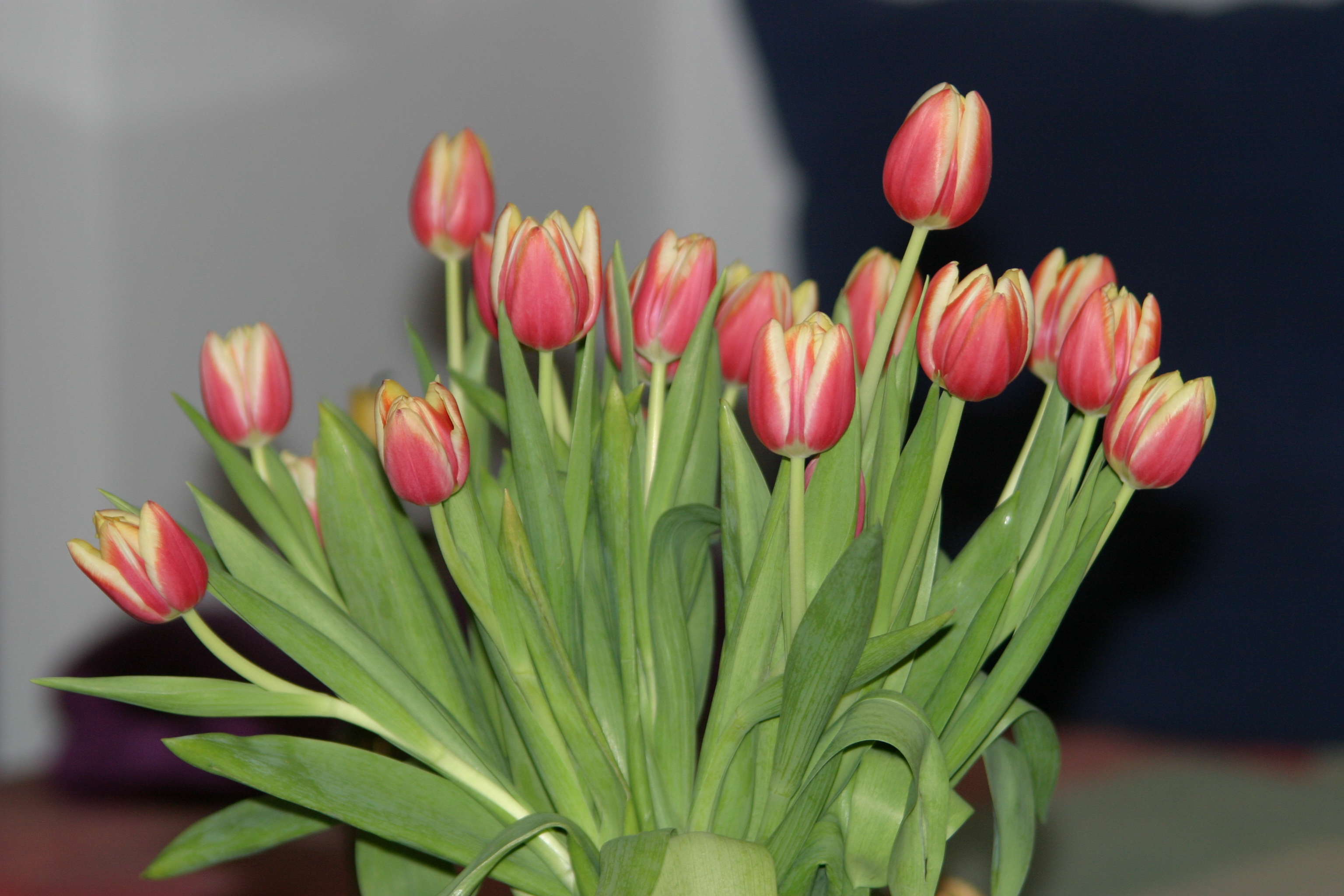 """alt=""""Blumen für die Medien"""""""