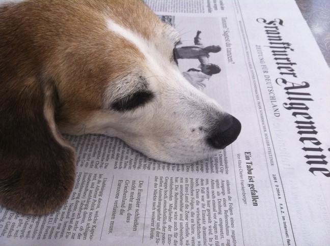 "alt=""Der Mallorca-Hund Betty liebt die FAZ"""
